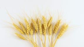 Granuli del frumento Fotografia Stock