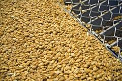 Granuli del frumento sulla griglia del silo Fotografie Stock Libere da Diritti