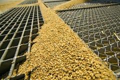 Granuli del frumento sulla griglia del silo Immagini Stock Libere da Diritti