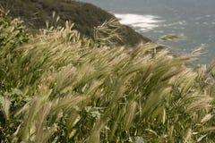 Granulo dal litorale Fotografia Stock Libera da Diritti