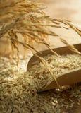 Granulo del riso Fotografie Stock
