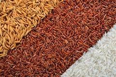 Granulo del riso Immagine Stock