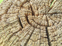 Granulo dell'estremità dell'albero Immagini Stock Libere da Diritti