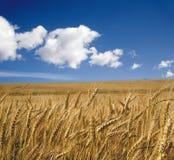 Granulo di estate e di cielo Fotografia Stock Libera da Diritti