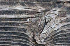 Granulo e nodo di legno Immagini Stock