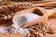 Granulo, farina e frumento Immagini Stock Libere da Diritti