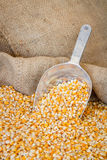Granulo giallo del cereale in un sacchetto di tela da imballaggio Fotografie Stock