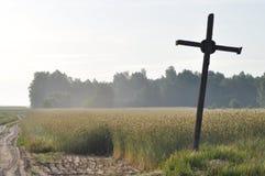 Granulo nei campi Orecchie di maturazione Raccolto e grano in farina poderi fotografia stock libera da diritti