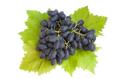 Grape Royalty Free Stock Photography