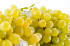 Grape. Bunch of grapes on white Stock Photos