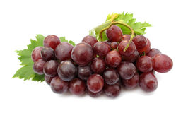 Grape. A grape is the non-climacteric fruit that grows on the perennial and deciduous woody vines of the genus Vitis. Grapes can be eaten raw or used for making Royalty Free Stock Images