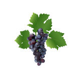 Grape Stock Photos