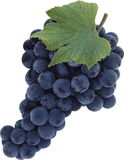 Grape. Royalty Free Stock Photography