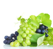 Grape. Beautiful Grapes border isolated on a white background Stock Photo