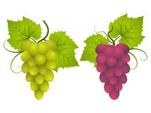 Grape. Bunches of red and green grapes Stock Photos