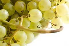 Grape. Close-up on several grapes with stalk Royalty Free Stock Photography