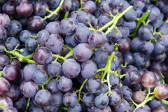 Grape. The background of fresh grapes Stock Image
