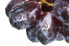 Grape. Close up of a grape with water drops Stock Photography