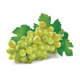 Grape. Isolated on white background Stock Photos