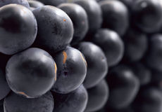 Grape. Abstract background from dark blue grapes close up Royalty Free Stock Photos