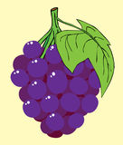 Grape Stock Image