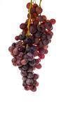 Grape. Red grape isolated on white background Royalty Free Stock Photography