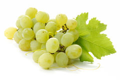 Free Grape Stock Image - 3144541