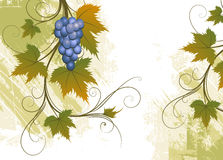 Grape royalty free illustration