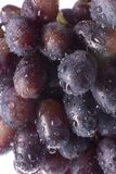 Grape. Close-up wet grape on the white background Stock Photo