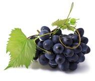 Free Grape Stock Photos - 39297403