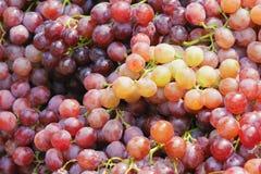 Free Grape Stock Photo - 42808130