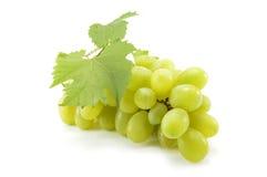 Grape Royalty Free Stock Image