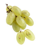 Grape. Mature grapes on a white background Stock Image