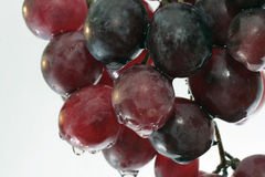 The grape Royalty Free Stock Images