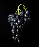 Grape. A bunch of grapes on black backgrounds Royalty Free Stock Images