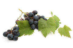 Grape Royalty Free Stock Images