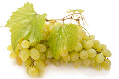 Grape. Bunch of raw grape isolated over white background Stock Images