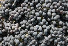 Grape. Close-ups of fresh grapes. Natural source of vitamins Stock Photography
