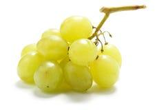 Free Grape Stock Photography - 8134542