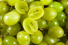 Grape royalty free stock photo