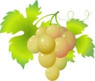 Grape Stock Image