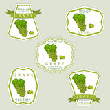 The grape. Abstract vector illustration logo for whole ripe berry grape with green stem leaf cut sliced on background.Grape drawing consisting of tag label peel Royalty Free Stock Photography