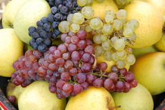The grape and apples Royalty Free Stock Image