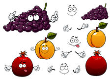 Grape, apricot and pomegranate fruits Stock Images
