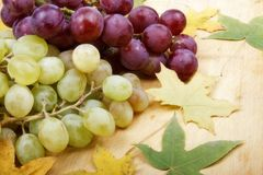 Grape in autumn Royalty Free Stock Image