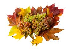Grape and autumn leaves isolated Stock Photography