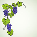Grape background Stock Photography
