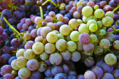 Grape background Royalty Free Stock Photos