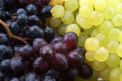 Grape background. Brushes of black and white grapes, are photographed, as a background Royalty Free Stock Image