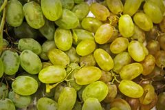 Grape. Grape harvest. Grape pattern. Stock Images